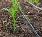 Solar-powered drip irrigation for crops