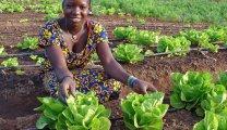 benin woman cabbage hi res