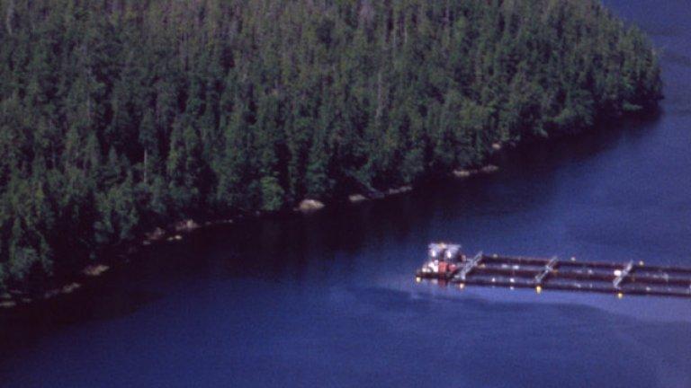 BC aquaculture hl