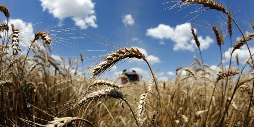 france wheat