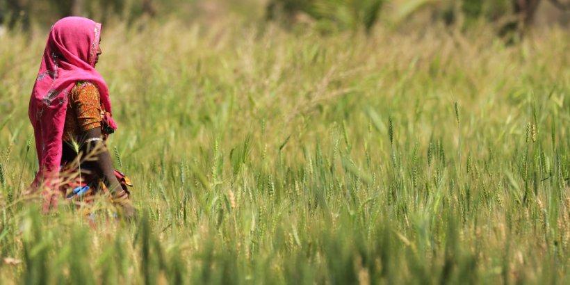india field farmer