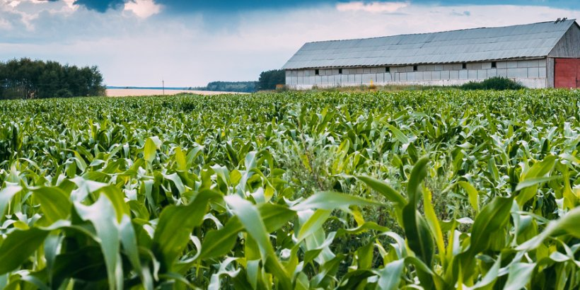 FSI - Notes from an Iowa Farm: Prices, Politics, and