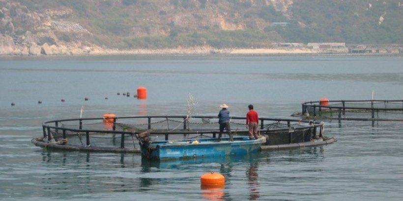 open water aquaculture