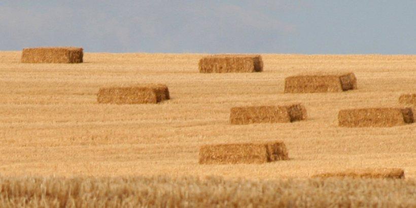 IMG 0305 crop