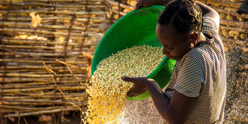 corn woman virtualwayfarer hl