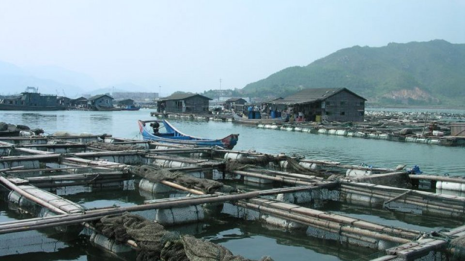 Fish farm in the ocean