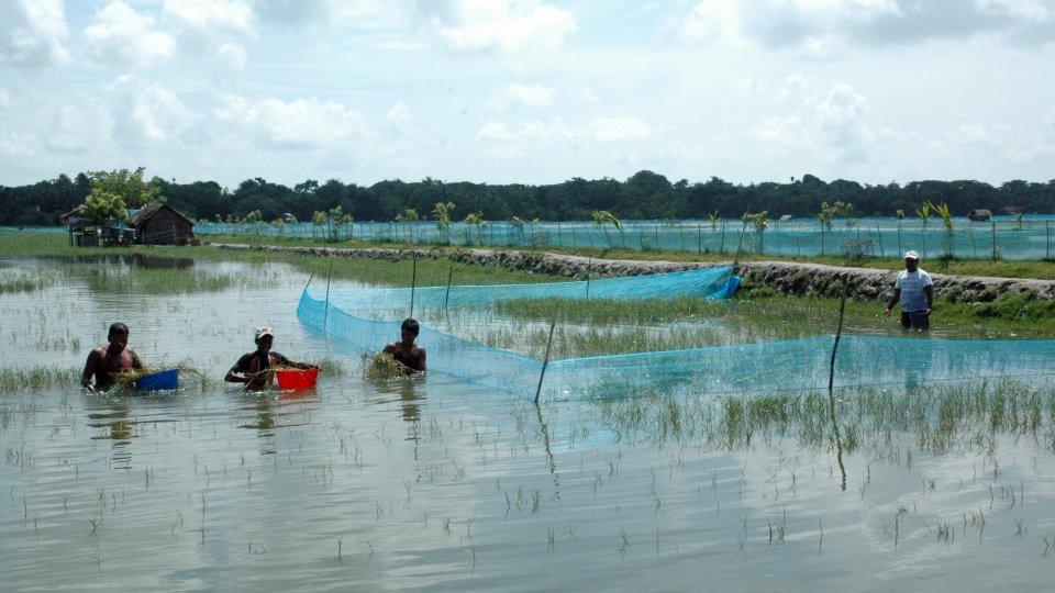 Aquaculture fishing operation