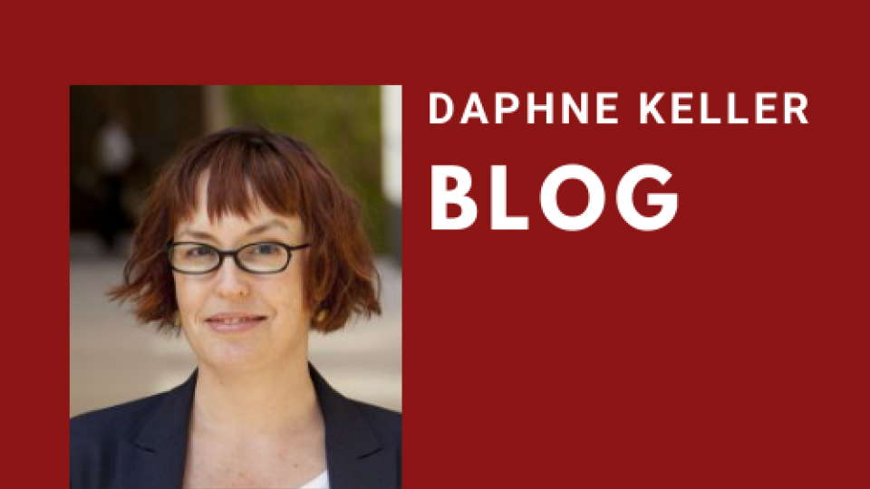 daphne keller blog header 2