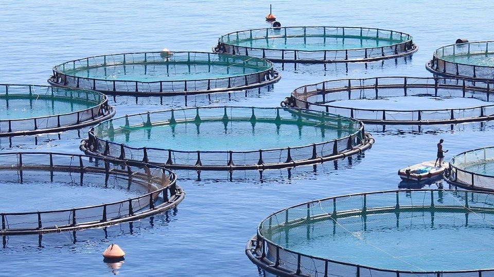 Fish farms in the ocean