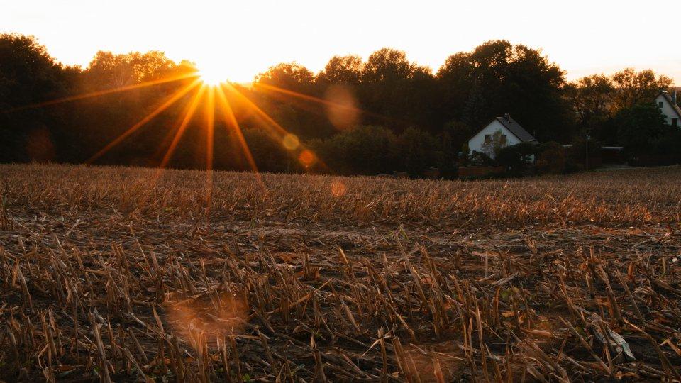 Dry grass field under a setting sun