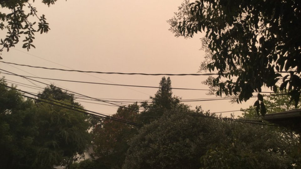 Trees and power lines in front of a brown smokey sky