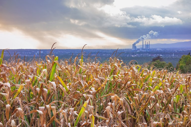 Corn crops with a power plant in the background