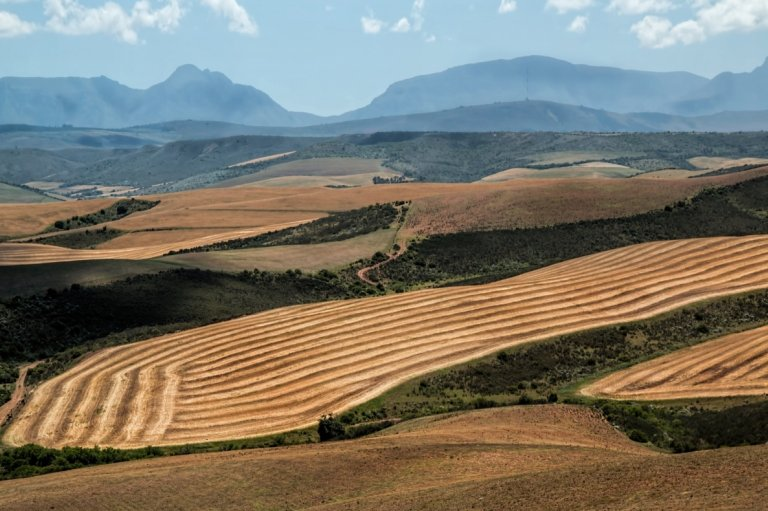 Hills of tilled grain in South Africa