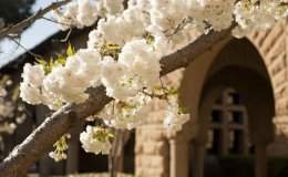 Stanford University online courses for high school students