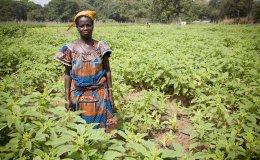 women field africa