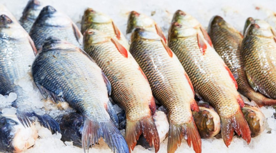 Fresh fish laying on a bed of ice