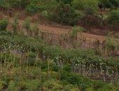 irrigated garden6