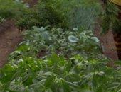 successful garden