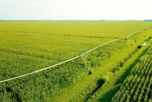 A long row of corn crops being irrigated