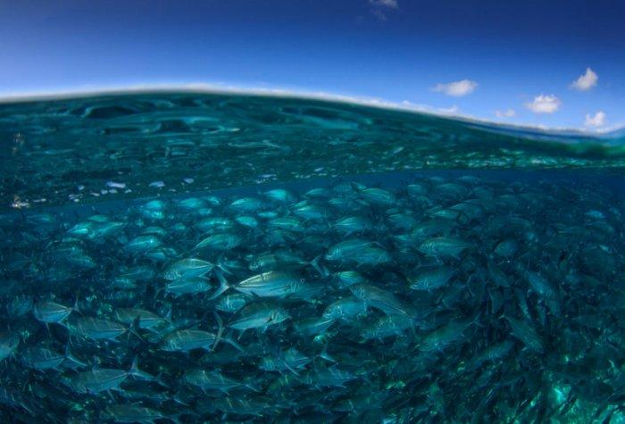 adobestock 116717930 fish in sea and sipadan island  half and half over under split image 960x640