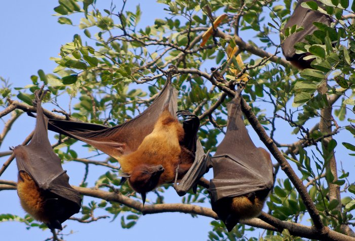 Bat hanging from a branch
