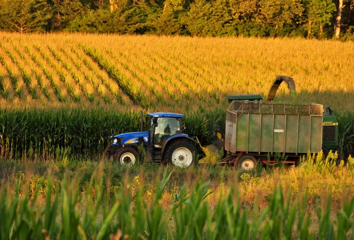 A tractor harvests corn in Iowa.