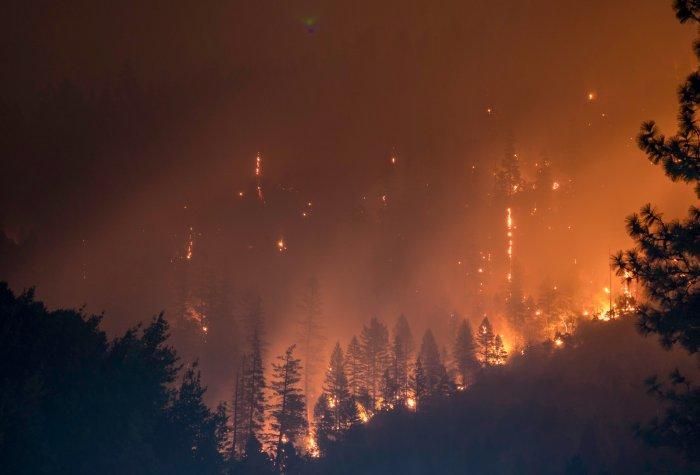 Forest fires burn