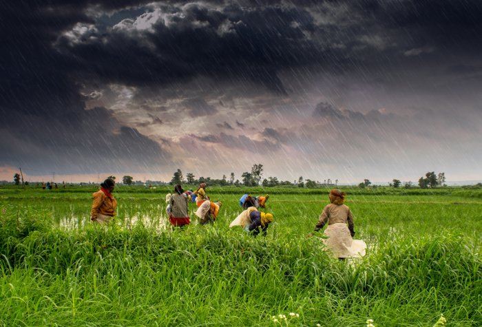 1 agriculture and rural farms of india