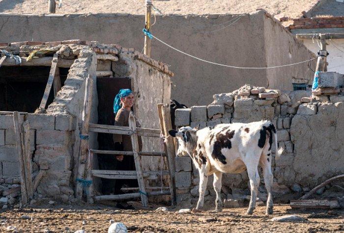 farmer and cow