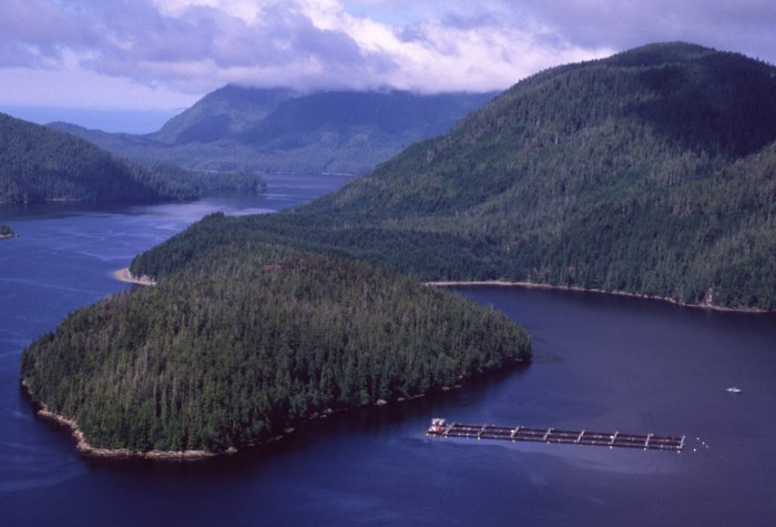 BC aquaculture news