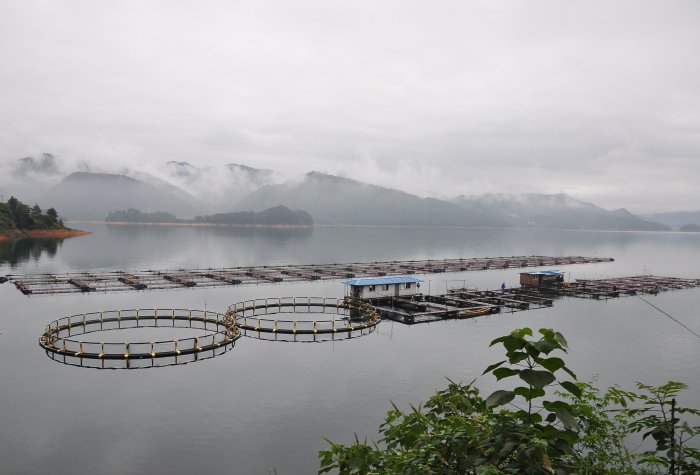 open water aquaculture