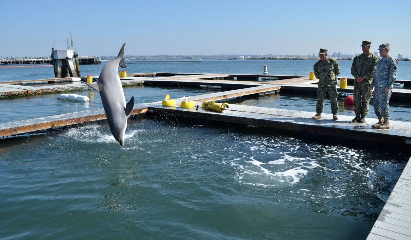Chairman of Joint Chiefs of Staff Gen. Martin E. Dempsey watches a dolphin jump out of the water during a tour of the U.S. Navy Marine Mammal Program in San Diego on March 12, 2012.