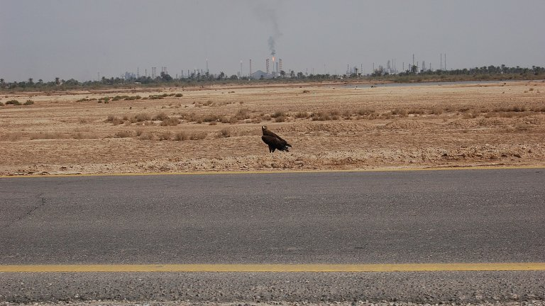 1600px eagle in basra iraq