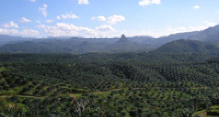 vs fse2 oil palm plantation in cigudeg indonesia attribution achmad rabin taim gallery