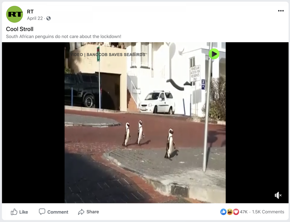 An RT post about penguins