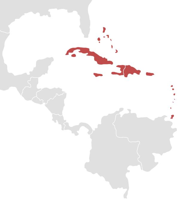topic region caribean
